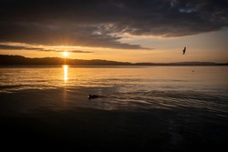 Sunset at the lake Sempachersee. Sunlight reflects on the water. Birds are flying in the sky and ducks in the water - image