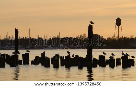 Sunset at the old Blaine, WA pier showing the pilings and concrete piers once used by lumber and salmon cannery ships, in silhouette against a golden sunset, marina and iconic water tower. #1395728450