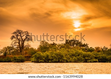 Sunset at Toubakouta, river bank with mangroves and baobab. #1163994028
