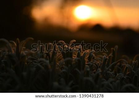 Sunset. Beautiful sunset. Colorful sunset. Nature
