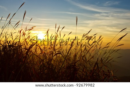 Sunset behind grass