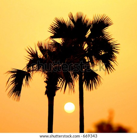 Sunset between palm trees, Bagan Archaeological Zone, Myanmar (Burma)