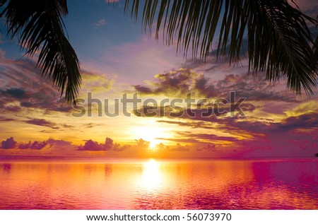 Sunset between Palms