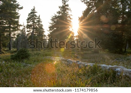 Sunset between pine trees in Jeseniky mountains. Late summer, sunny evening. Sun behind trees, sun rays, visible lens flares. Fallen tree. Northen Moravia, Czech republic, Europe