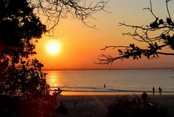 Sunset between trees in and beach with surfers
