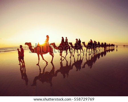 Sunset camel safari along Cable Beach in Western Australia.  #558729769