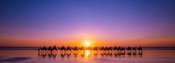 Sunset, Camels, Cable Beach, Broome, Western Australia, WA, Australia