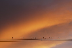Sunset Cloudscape and Silhouette Birds on wire