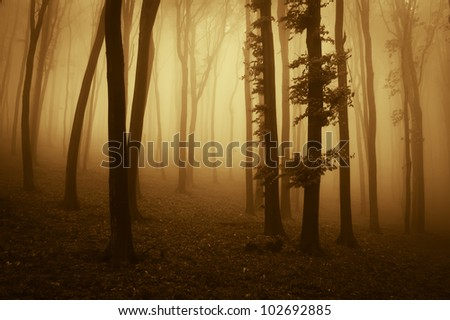 sunset colors in dark forest