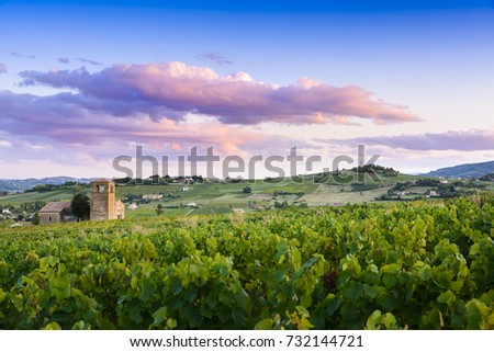 Sunset colors over vineyards of Beaujolais in France