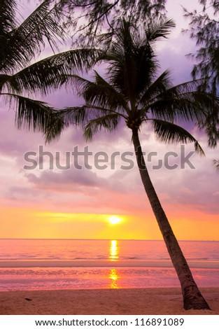 Sunset Divine Coconut Horizon