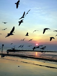 Sunset dusk  and Seagull birds flying home , for family , from the beach .Beautiful color on the sky blue , orange ,yellow light. Beautiful sun on the horizon. Feeling warm relax hope happiness