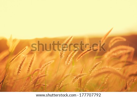 Sunset Field, Beautiful Vibrant Color. Abstract Shallow Focus