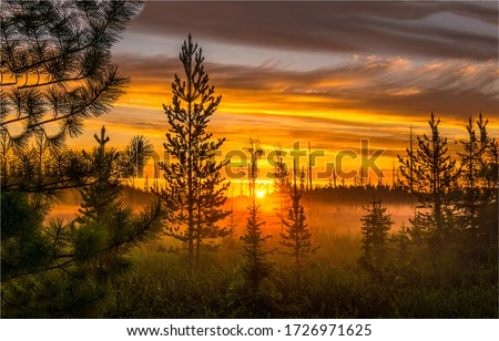 Sunset field fog landscape. Sunset fog nature scene. Nature field sunset fog landscape