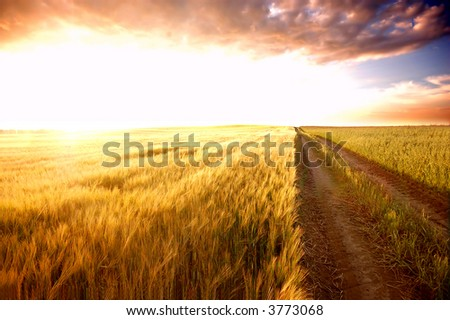 Sunset field scenery before harvest #3773068