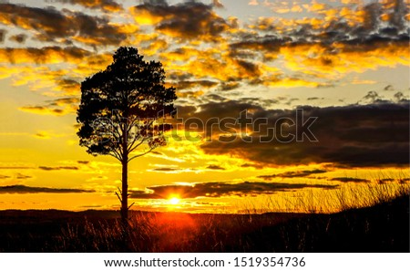 Sunset field tree silhouette landscape. Sunset tree silhouette. Sunset tree field view. Sunset tree sky clouds landscape. Sunset field tree sky clouds view