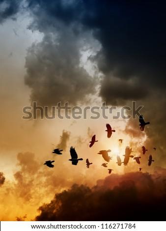 Sunset, flock of flying ravens, crows in dark sky