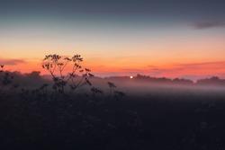 Sunset fog view of flowers in a danish country fiel. Danish landscape, Lønstrup in North Jutland in Denmark, Skagerrak, North Sea