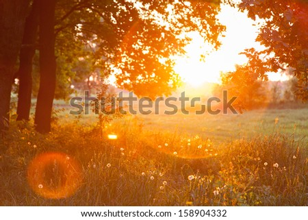 Sunset. Forest Glade. The branches of the trees. Green grass. Glare.
