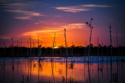 Sunset forest marshland water view. Marshland sunset view. Sunset marshland landscape