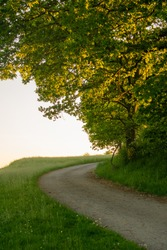 Sunset goldenhour road countryside tree