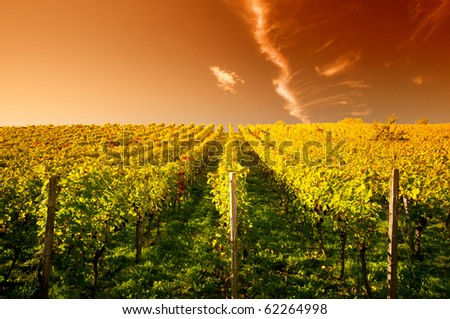 Sunset in a vineyard in Hessen Germany Stockfoto ©