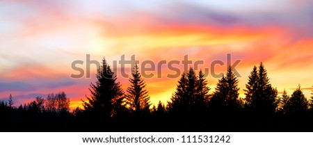 Sunset in Alaska. Panorama of a big colorful sky above silhouetted trees.