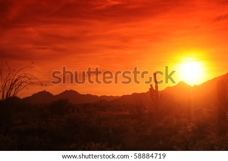 Sunset in Arizona with saguaro and ocotillo in front