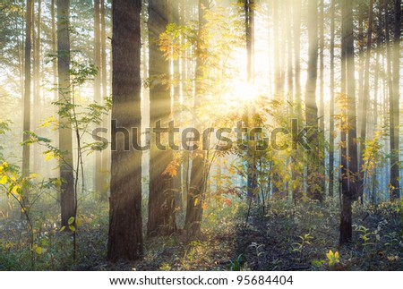 Sunset in autumn forest