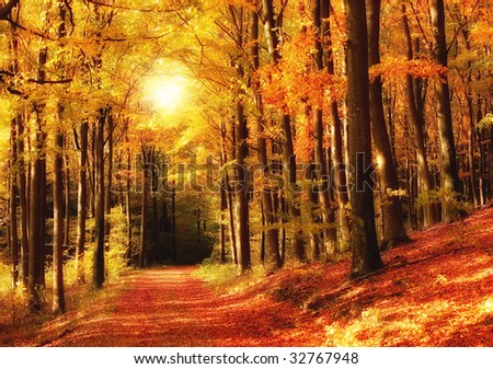 Sunset in autumn forest - a saturated forest in the fall