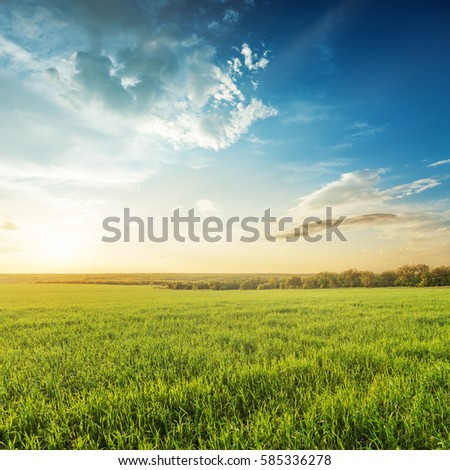 sunset in blue sky over green agricultural field #585336278