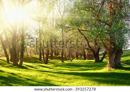 Sunset in forest, sunlight with tree shadows on glade