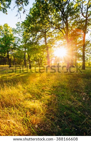 Sunset In Forest Trees. Natural sunlight sunshine in woods. Very sunny sunrise with sun rays through woods trees in summer forest. Lens flare effect - Shutterstock ID 388166608
