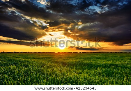 sunset in green field, spring landscape, bright colorful sky and clouds as background #425234545