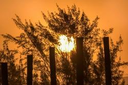 Sunset in High Contrast to the Trees - Pôr do Sol em Contraste com as Árvores