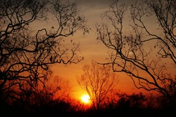 Sunset in outback Northern Territory Australia