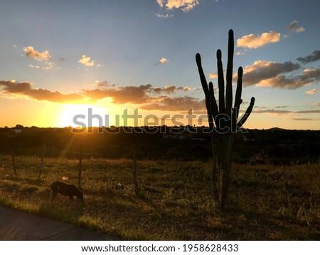 Sunset in Piranhas, AL, Brazil Foto stock ©