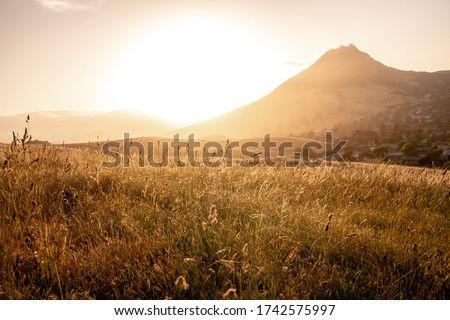 Sunset in San luis obispo in california, usa over a wheat field with view on the bishop peak mountain. Stockfoto ©