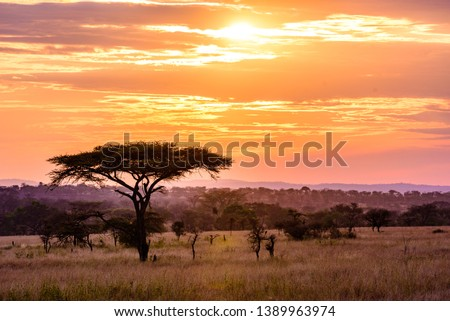 Sunset in savannah of Africa with acacia trees, Safari in Serengeti of Tanzania #1389963974