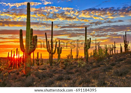 Sunset in Sonoran Desert, near Phoenix.