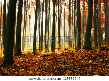 Sunset in the autumn forest