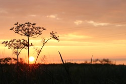 sunset in the background and fennel seeds in the foreground
