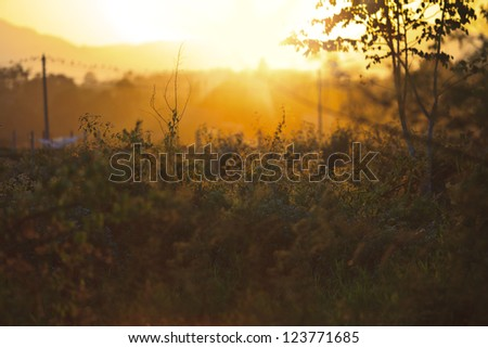 sunset in the country side