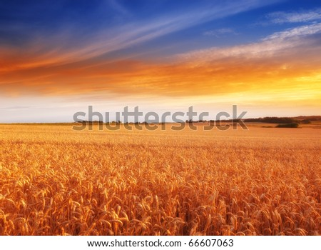 Sunset in the countryside in summer - lots of copyspace - stock photo