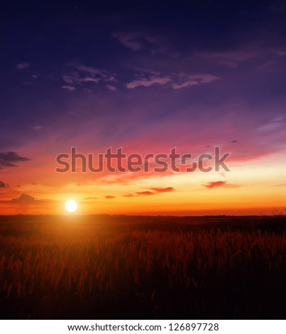 sunset in the field #126897728