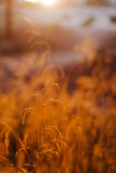 sunset in the forest during golden hour. Beautiful Nature. close up view