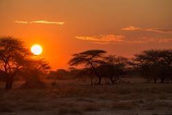 Sunset in the savanna, Etosha national park, Namibia, Africa
