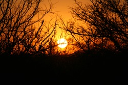 sunset in the southafrican bushland