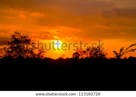 sunset in the tropics with trees