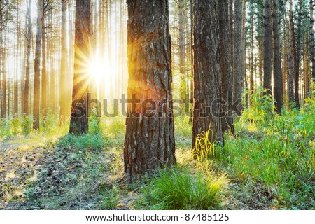 sunset in the woods, hdr photo - Shutterstock ID 87485125